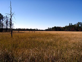 Bear Bluff Meadow, photo by Andy Paulios