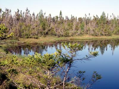 Bibon Swamp, photo by Ryan Brady