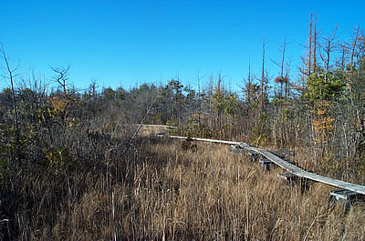 Cedarburg Bog, photo by Gretchen Meyer