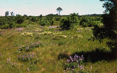 Crex Meadows Prairie, photo by Jim Hoefler