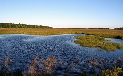 Fish Lake Wetlands & Barrens, photo by Andy Paulios