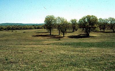 Fort McCoy Oak Barrens, photo by Eric Epstein