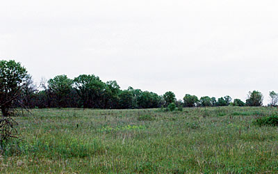 Fort McCoy-Robinson Creek Barrens, photo by Yoyi Steele