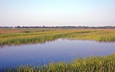 Green Bay West Shore Wetlands, photo by Robert Howe