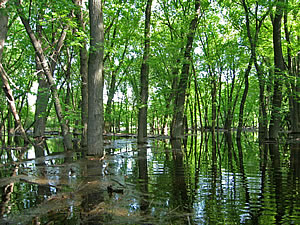 Lake Koshkonong Forest, photo by Gary Shackelford