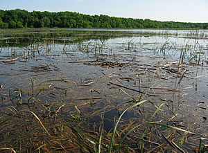 Lake Koshkonong Marsh, photo by Gary Shackelford
