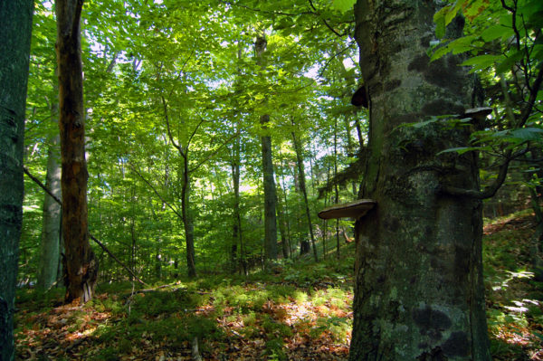 Whitefish Dunes forest, photo by Robert Howe