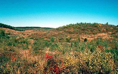 Moquah Barrens, photo by WDNR