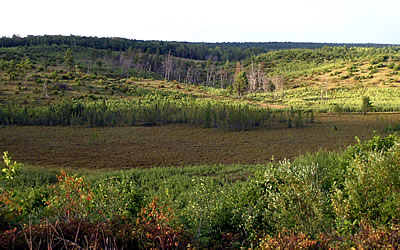 Namekagon Barrens, photo by Andy Paulios