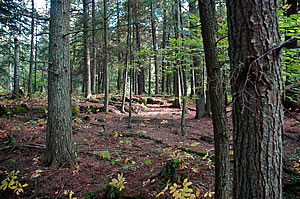 Toft Forest, photo by Robert Howe