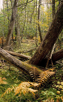 Upper Chippewa Forest, photo by Thomas Meyer