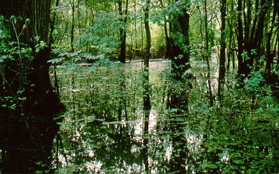 Upper Mississippi River Refuge, photo by USFWS