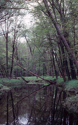 Van Loon Bottoms, photo by WDNR