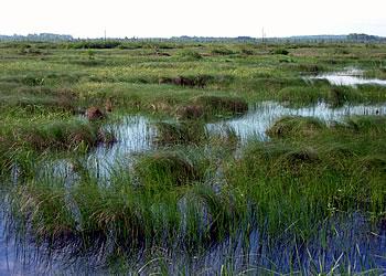 Manitowish Peatlands, photo by Ryan Brady