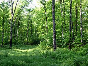 Menominee Forest, photo by Ryan Brady