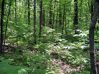 North Kettle Moraine State Forest, photo by Barbara Delaney