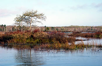 South Shore Wetlands, photo by Eric Epstein
