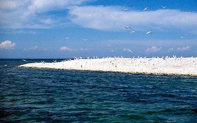 Gull Island Lake Erie